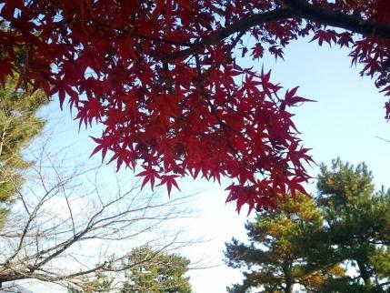 2013/11/23 嵐山