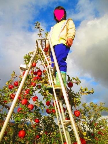 りんごと白馬13