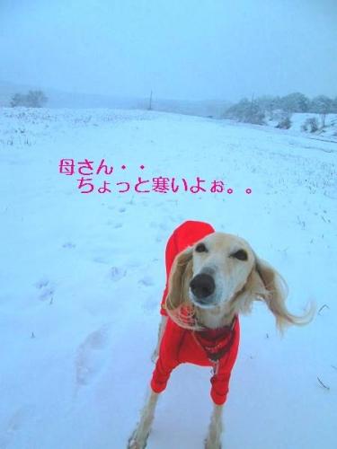 初雪遊びは2