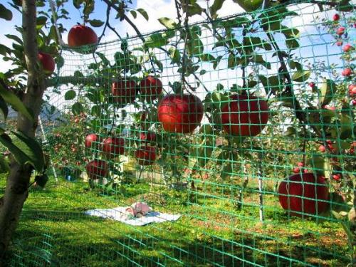 収穫の時2
