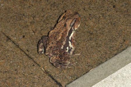 20130727-7-frog.jpg