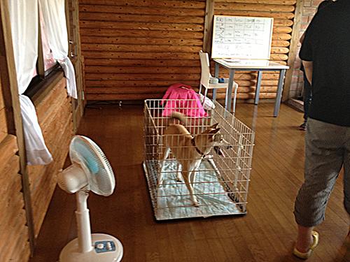 03トイレトレーニング2