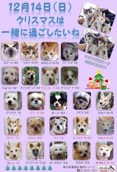 ALMA ティアハイム2014年12月14日 参加犬猫一覧