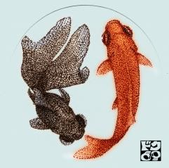 出目金&金魚 カラー