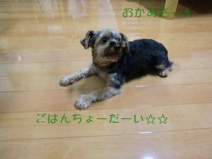 2010_0723_213128-CIMG0151