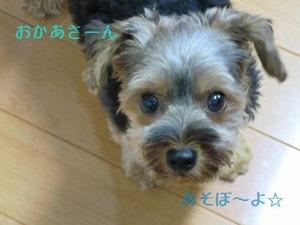 2010_0806_ぱいん君 おかさーん あそぼ~よ☆