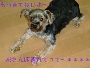 2010_0723ぱいん君おさんぽつれてって~!