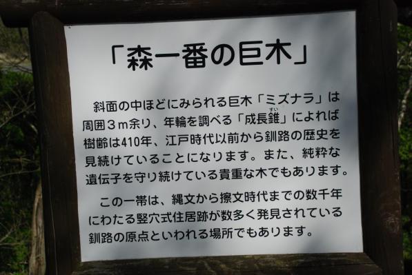 釧路市 武佐の森