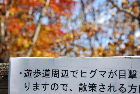 晩秋の釧路湿原