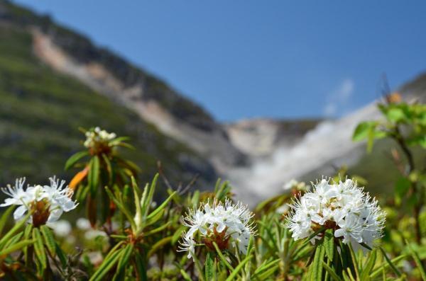 硫黄山つつじヶ原自然探勝路