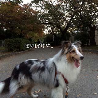 IMG_6088.jpg