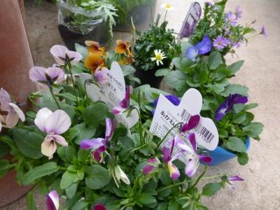 琴花園購入品 2013 11・27