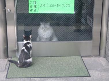ラブラブ猫