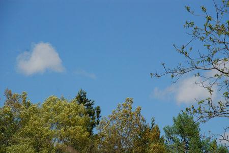 青空と新緑3