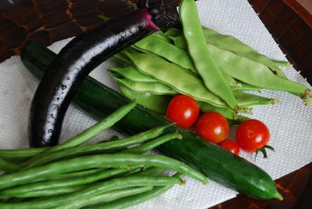 今朝の収穫野菜20
