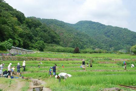 田の草取り2