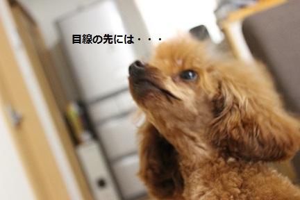 IMG_6792.jpg