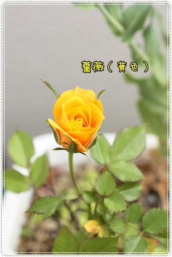 IMG_0008_20130527230503.jpg