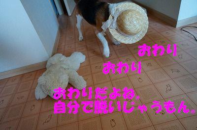 4_20130717162240.jpg