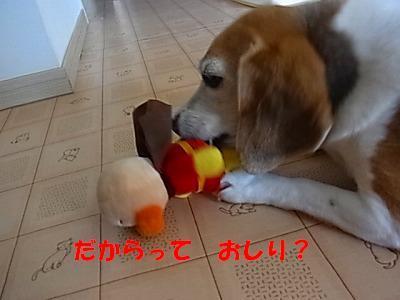 7_20130704135931.jpg