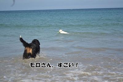DSC_0349_20130621151738.jpg