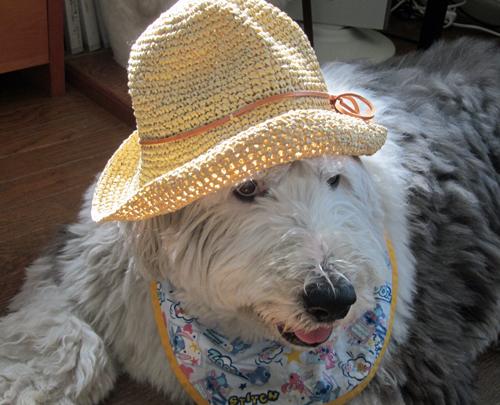 パディントンの帽子?