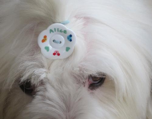 ボタンで・・・・
