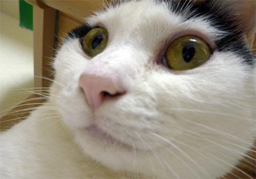 白黒猫あっぷ