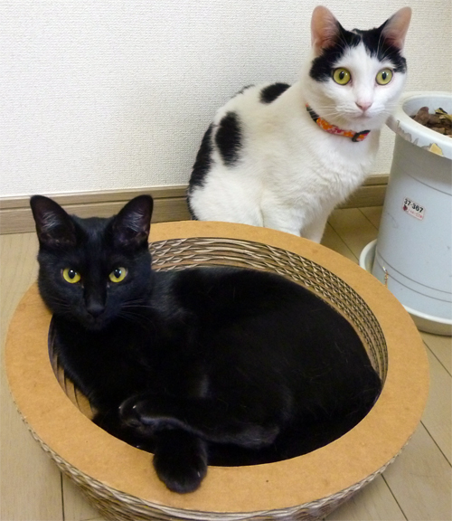 黒猫と白黒猫