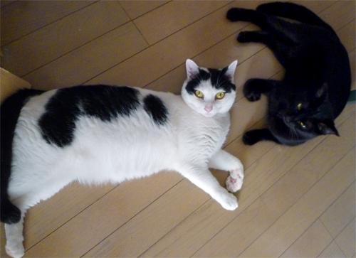 白黒猫と黒猫