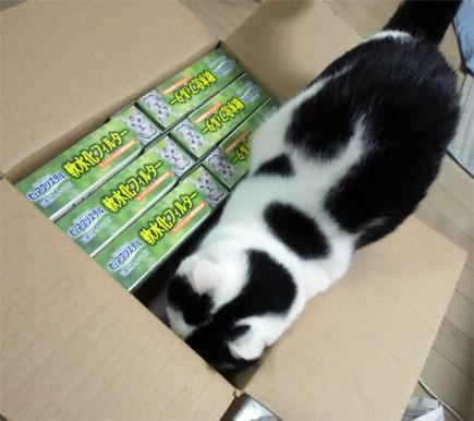ダンボール箱を覗く猫