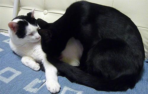 白黒猫と黒猫仲良し