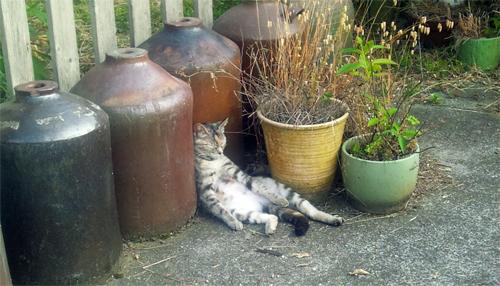 腹出して寝る猫