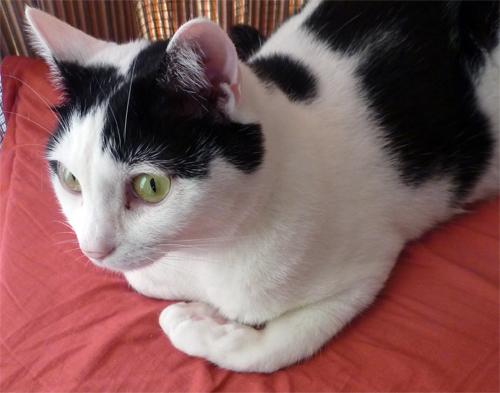 香箱座りが崩れた猫