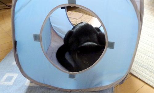 ビニールハウスの黒猫