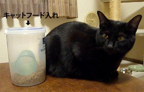 フードストッカーと黒猫