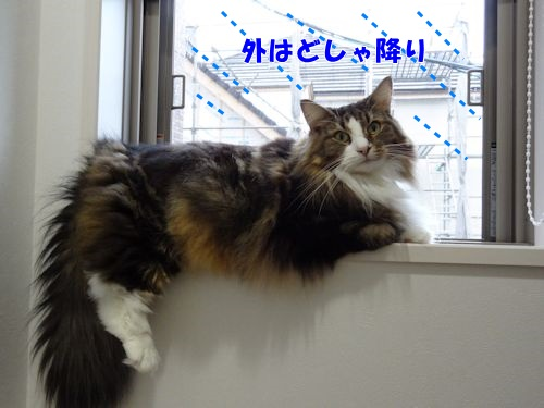 uruoi5_text.jpg