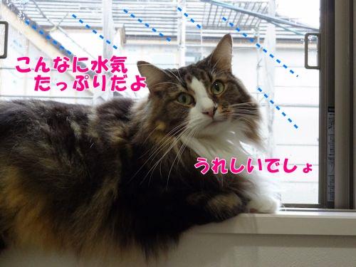 uruoi6_text.jpg