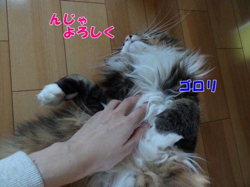wana4_text.jpg