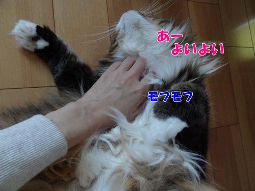 wana5_text.jpg