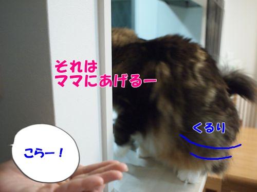 warashibe10_text.jpg