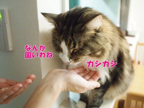 warashibe8_text.jpg