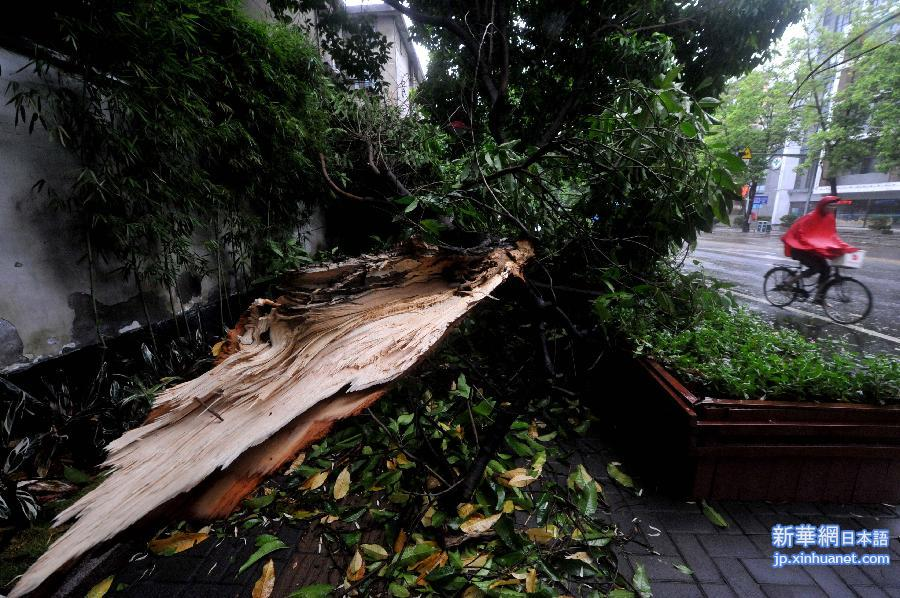 132652367_11n8月22日、中国の福州市鼓楼区のある街路樹が狂風に吹かれて折れた。
