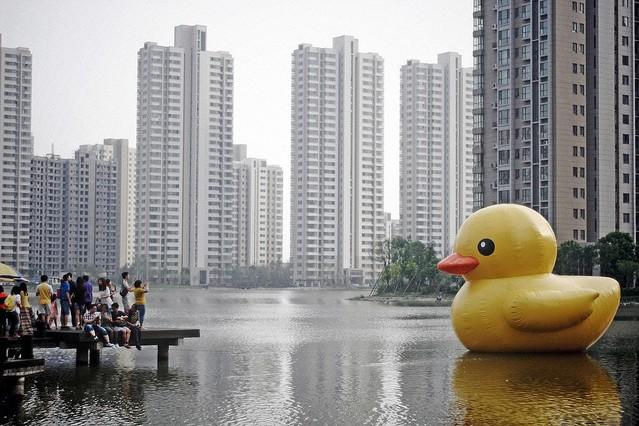 画像】中国本土に「偽アヒル」出現、香ccce3_1351_962c7414_cae9450f