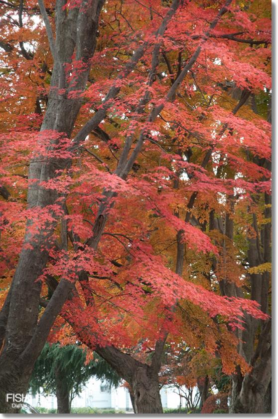 141109-momiji2.jpg