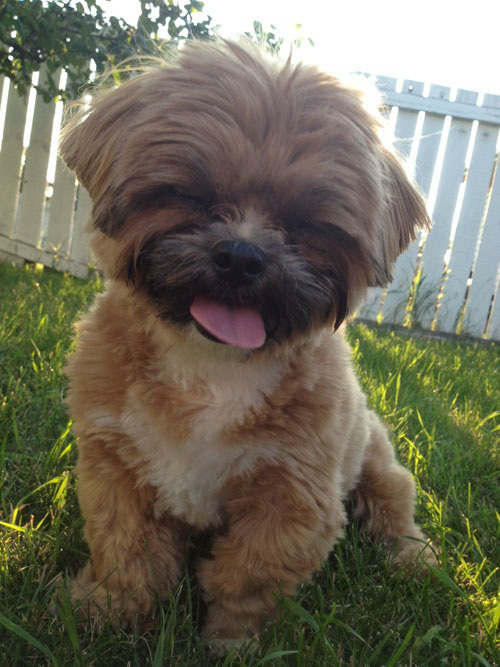 awesome-cute-derpy-dogs-39.jpg