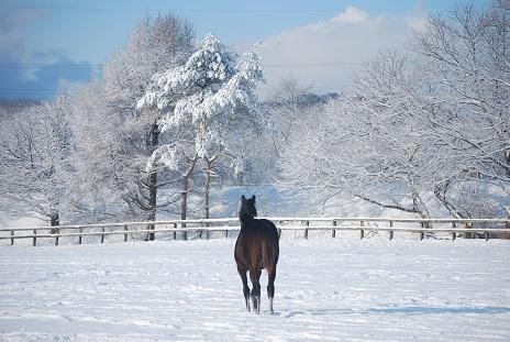 1・1歳・雪景色