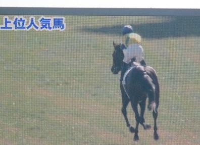 1・新馬・ターフビジョン