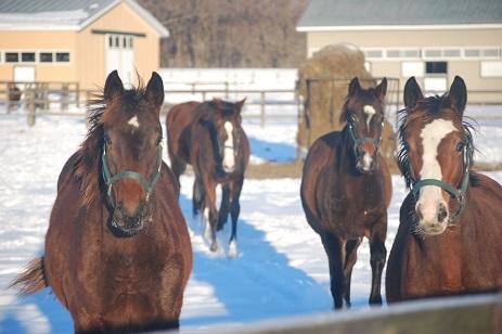 1・15℃・牝馬来る