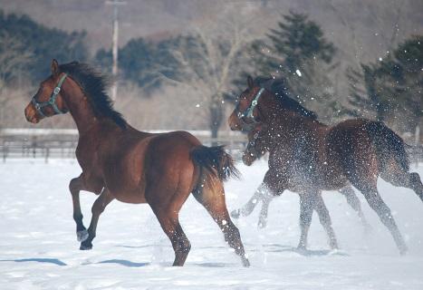 2・牡・雪を蹴って2